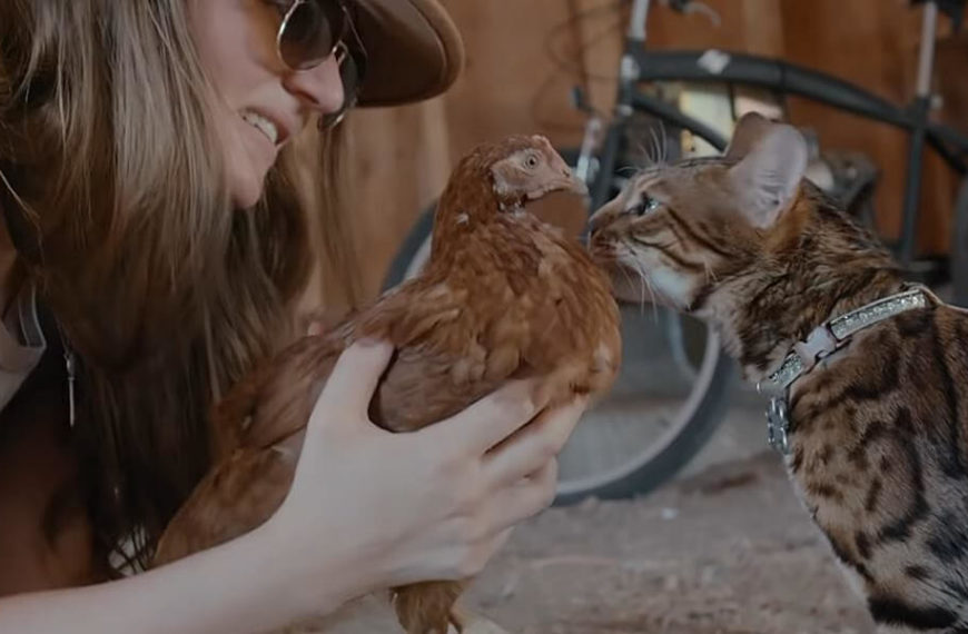 Netflix drops the trailer for Cat People which is an adorable docuseries